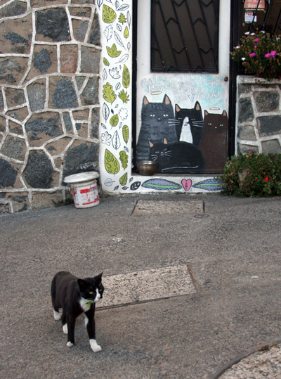 Cat in Valaparaiso with mural