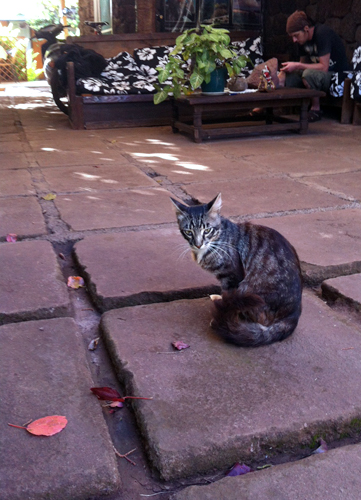Our hostel kitty at the Kona Tau.
