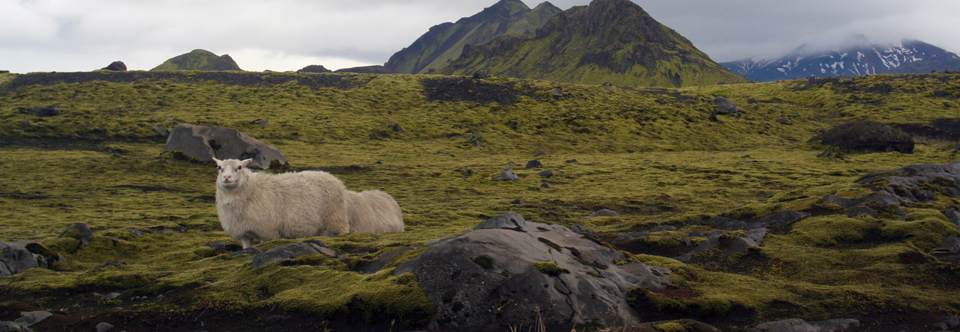 Iceland: My Introduction.